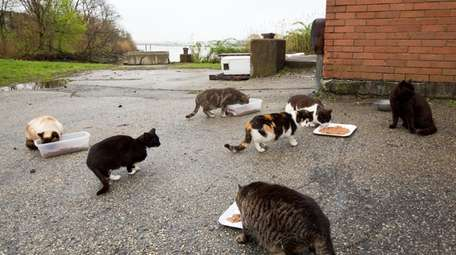 Feral cats gather for breakfast at the Oceanside