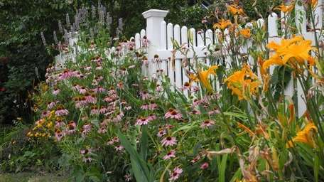 The perennial border in front of garden columnist
