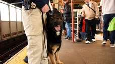 Det. Wayne Rothschild of the NYPD's Transit Canine