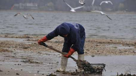 Bill Strigaro, 56, of Bayville, digs for soft