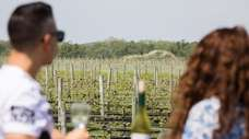 There are 45-plus Long Island wineries open to