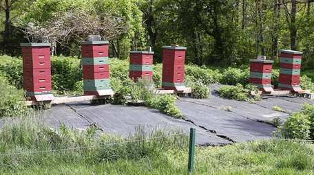 The bee colony off of the fairway on