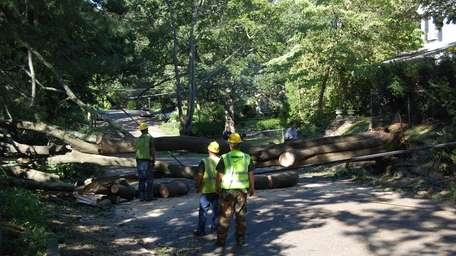 A tree-cutting crew from Georgia clears a fallen