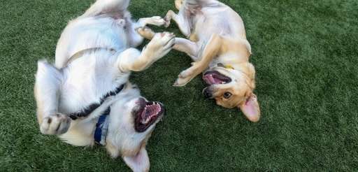Jake and Brady play at a meetup and