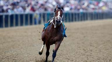 Bodexpress runs in the 144th Preakness Stakes horse
