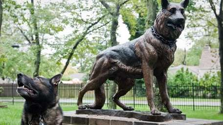 Retired NYPD canine Apollo, owned by Retired NYPD