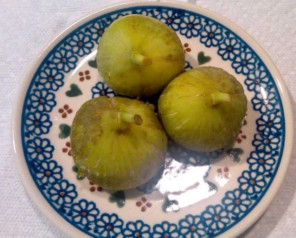 Ripe green figs, harvested from a tree in