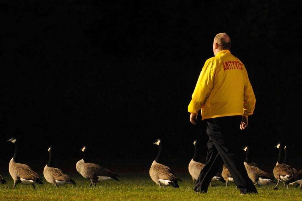 Canadian geese defiantly remain on the dimly lit
