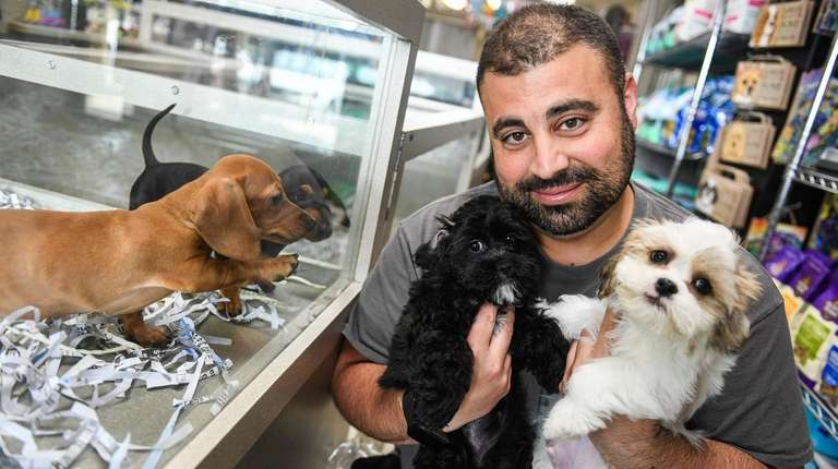 Bill would ban sale of puppies, kittens, rabbits at pet stores | Newsday