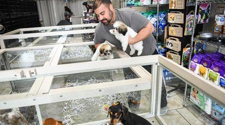 Bill would ban sale of puppies, kittens, rabbits at pet