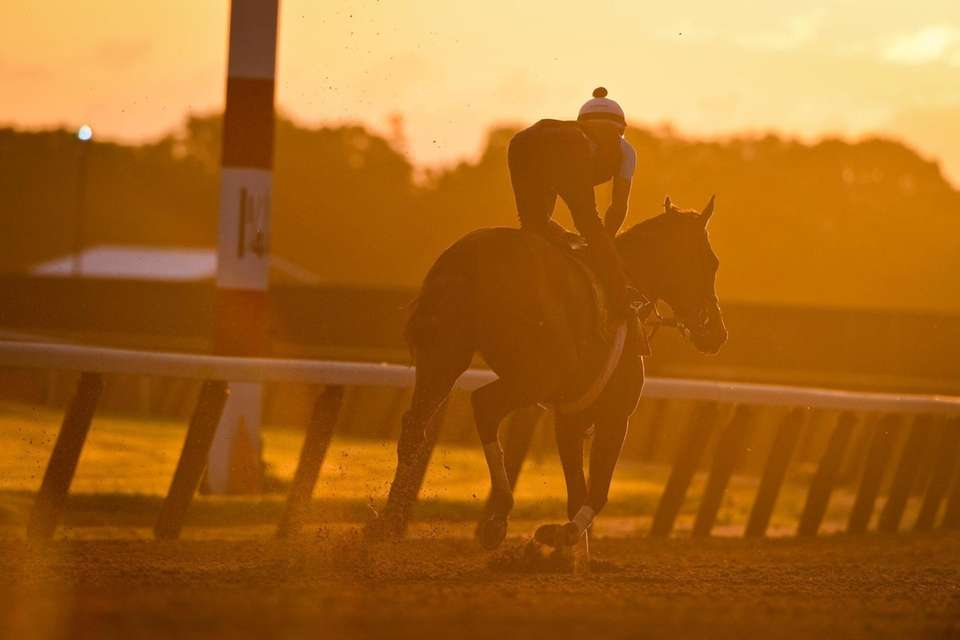 Horses run the track in the morning light