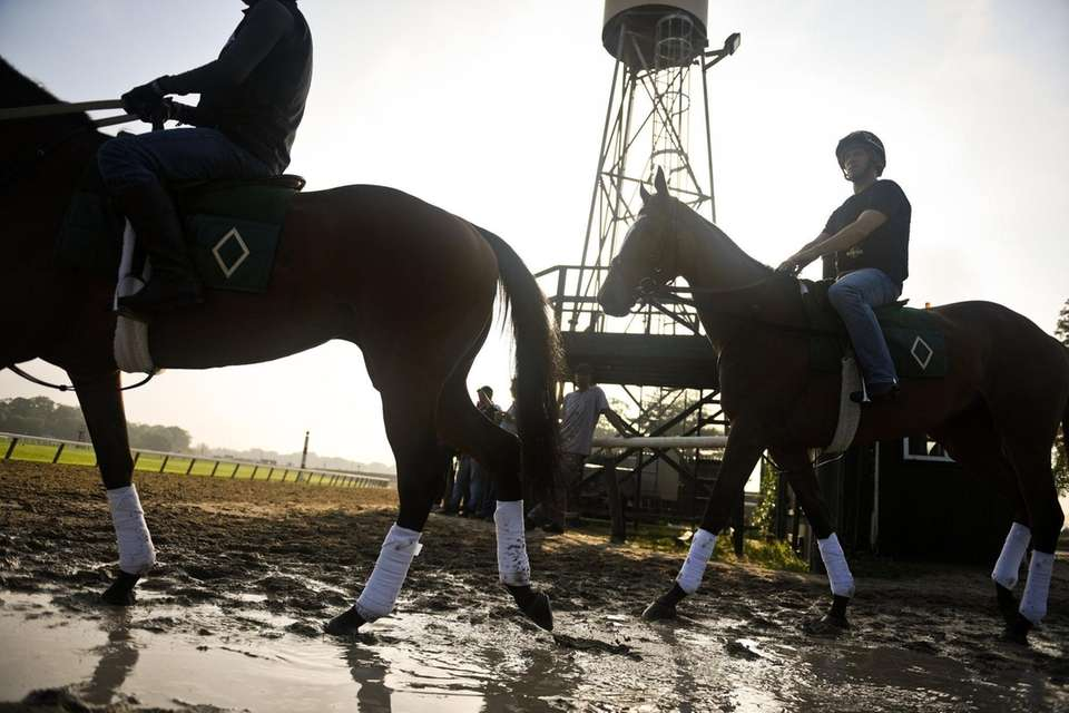 Horses walk out onto the track at Belmont