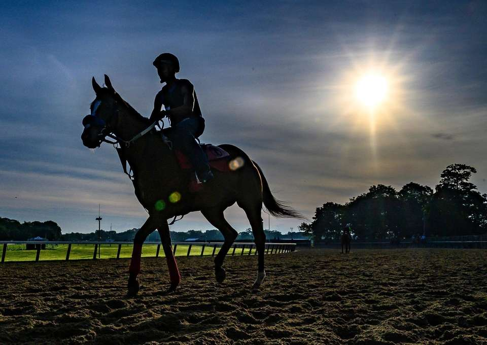 Horse getting in their morning workout at Belmont