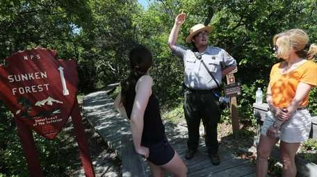 Free tours of sunken forest on Fire Island
