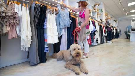 Oliver, a 5-year-old goldendoodle, shops with owner Hilary