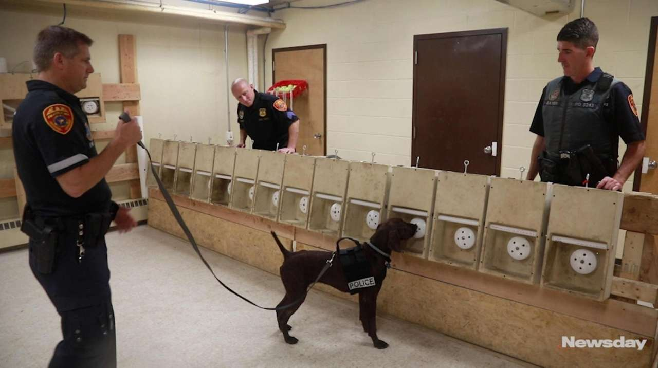 Newsday followed officers fromthe Suffolk County Police Department'scanine