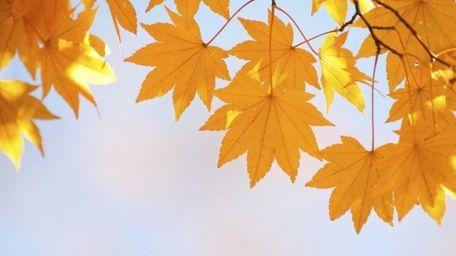 Fall foliage peaks in November on Long Island.