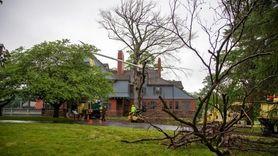 A chain saw buzzed through a tree next
