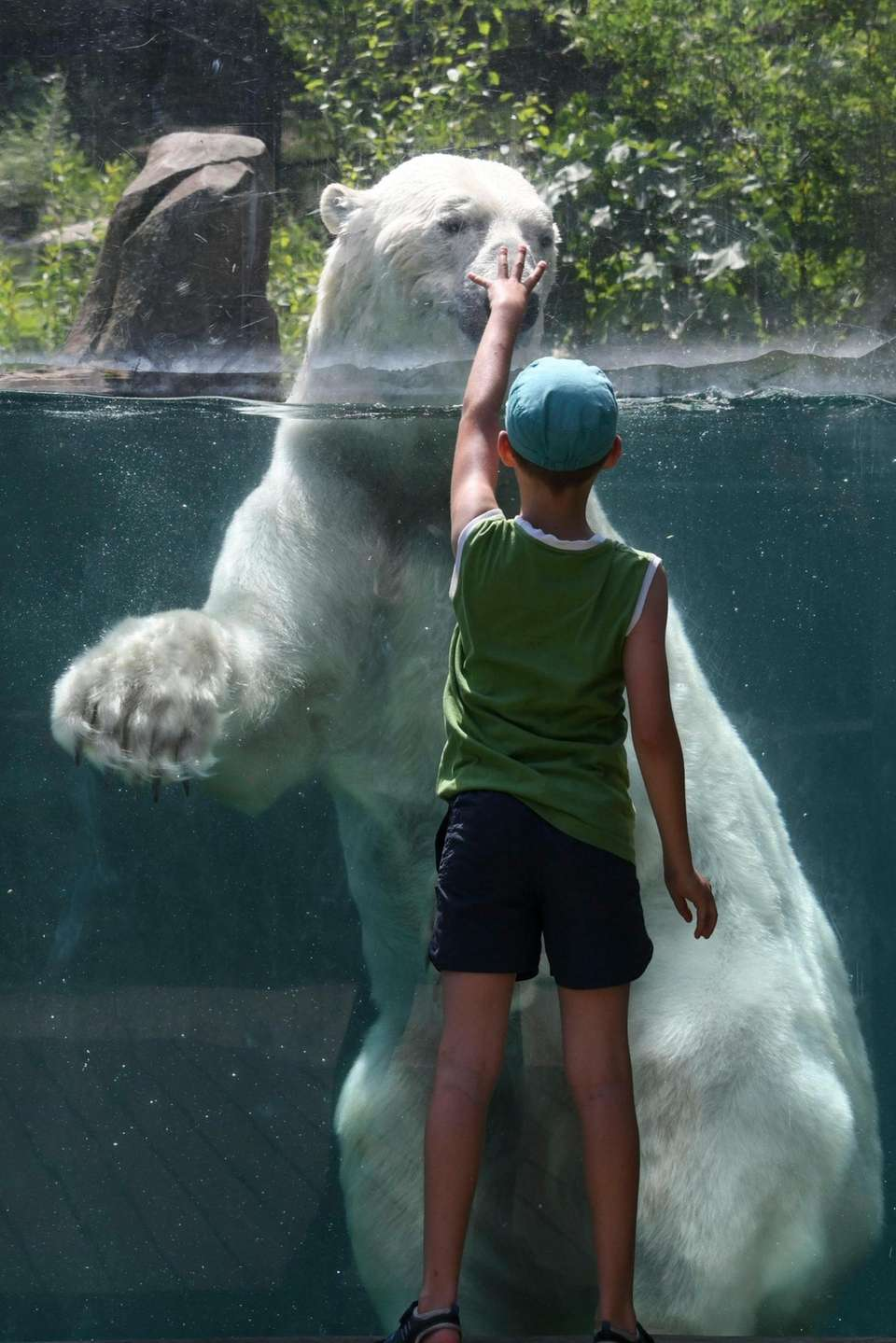 A child gestures in front of a polar