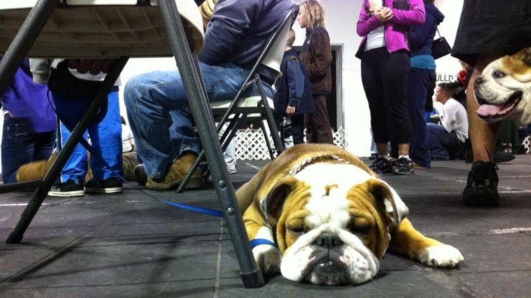 Bulldogs Converge On Bay Shore Newsday