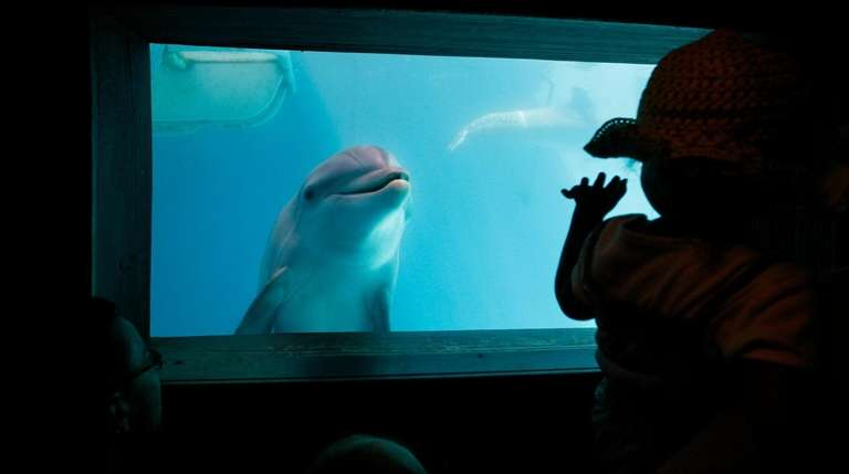 Winter, the tailless dolphin, makes friends at an