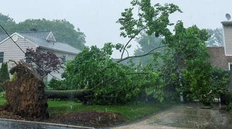 A tree on Lincoln Boulevard in Bay Shore
