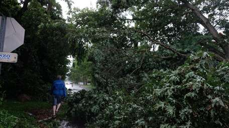 A fallen tree on Montauk Drive in Bay