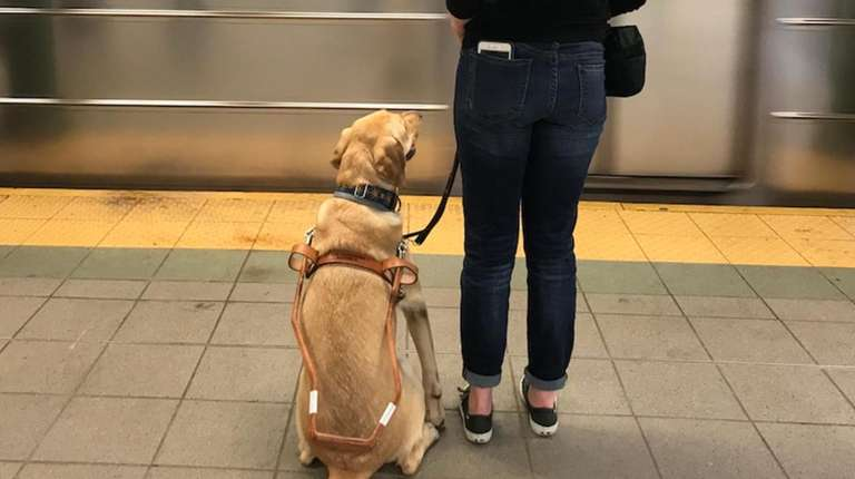 """Sunny uses """"intelligent disobedience"""" to keep his handler"""