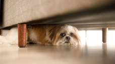Keep your pets safe during Fourth of July