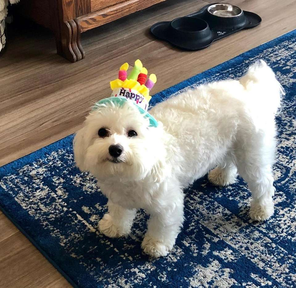 Cooper Baron-Silverstein celebrating his one year birthday at