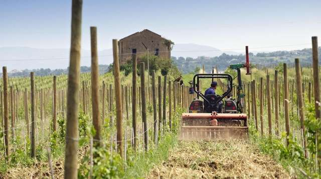 A tractor plows soil in a vineyard in