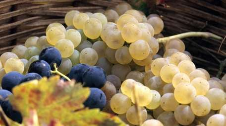 A bounty of grapes from southern Italy.