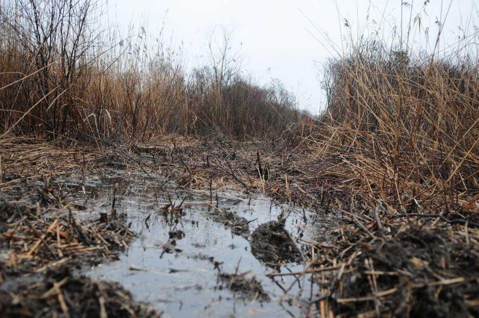 Part of the Oak Beach marsh area where