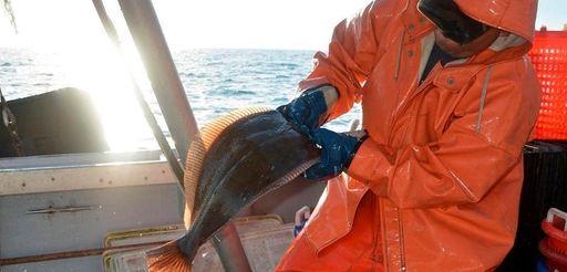 A commercial fisherman sorts fluke on the Long