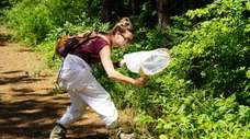 Kelsey Law searches for butterflies last month in