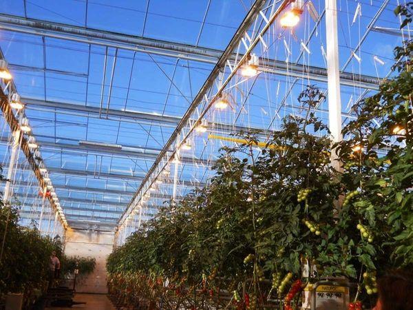 Interior view of a Hydroponic farm in Maine.
