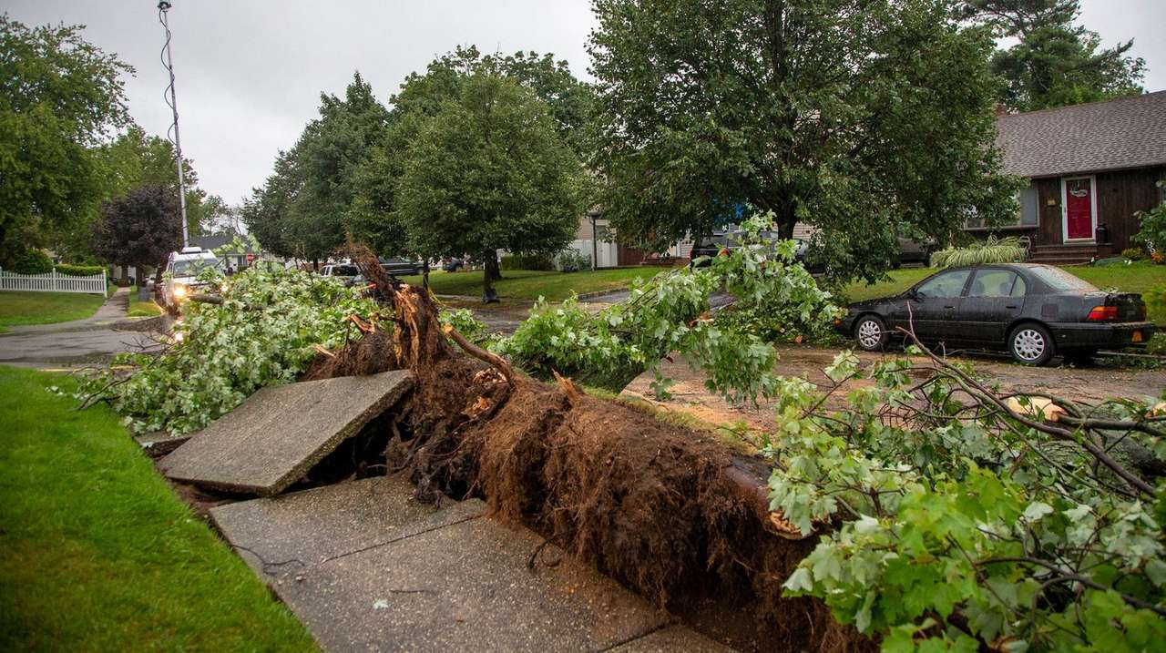 Remnants of a downed tree lay at the