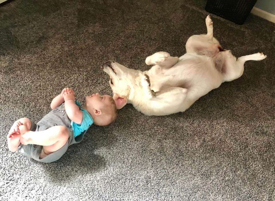 My 8 month old son, Justin, and Labrador,