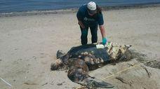 Kimberly Durham of the Atlantic Marine Conservation Society