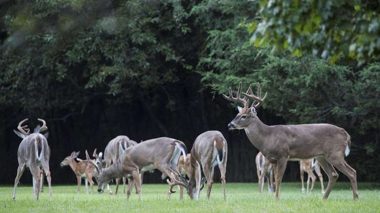 Majority of large-property owners surveyed in Southold said they would open land to cull deer