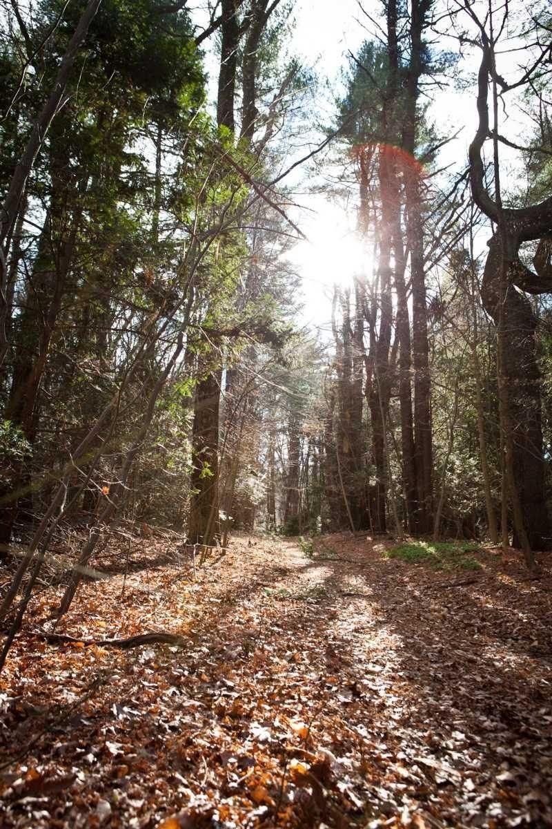 The walking trail at Bailey Arboretum in Lattingtown