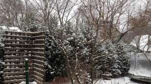 Snow should be removed from evergreen branches to