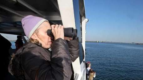 The Riverhead Foundation runs winter harbor seal-watching cruises