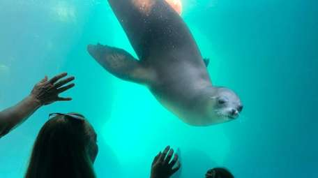 Sea lions are one of the featured attractions