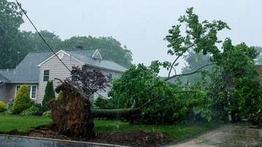 A tree fell on Lincoln Boulevard in Bay