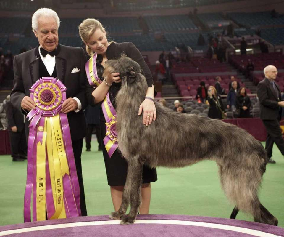 Scottish Deerhound Hickory poses for photographers with his