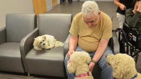 Resident Barry Cohen pets Barbie while Pumpkin, left,