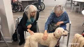 The nonprofit Therapy Dogs of Long Island brought