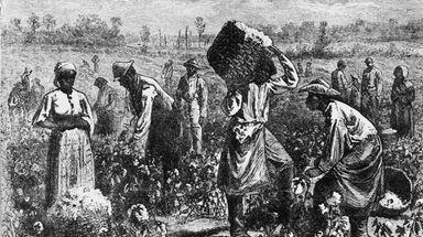 Circa 1800: Slaves picking cotton on a plantation.