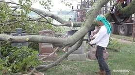 Trees fell on live wires, cars, roads and